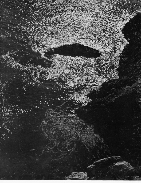 [Prospectus only for] My Camera on Point Lobos: 30 Photographs and Excerpts from E.W.'s Daybook. Edward Weston.