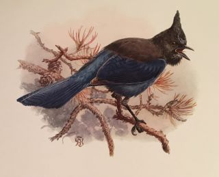 The Birds of California: A Complete and Popular Account of the 580 Species and Subspecies of Birds Found in the State (SIGNED, 4 volumes)